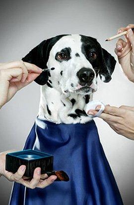 dog-beauty
