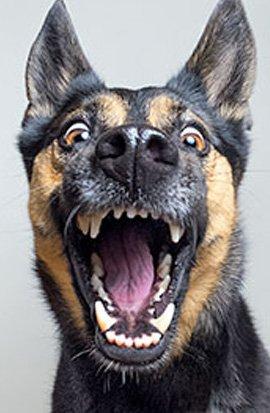 dog-outlet