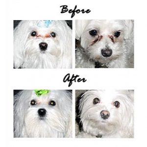 EYE ENVY POWDER polvere smacchiante occhi per cani e gatti