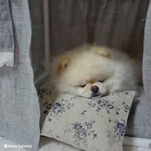 LINEN PILLOW cuscino Louisdog